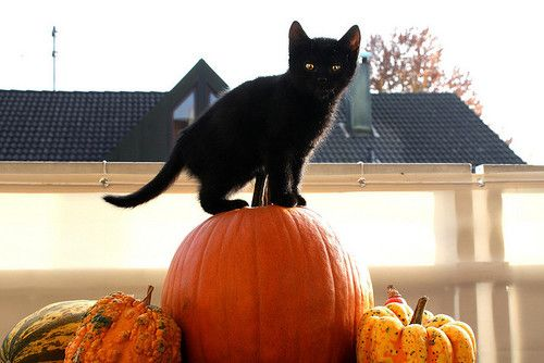 Black-cat-on-a-pumpkin.jpg