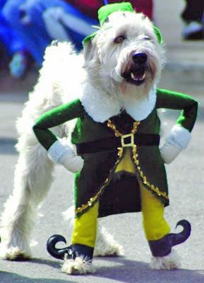 st-patricks-day-dog.jpg