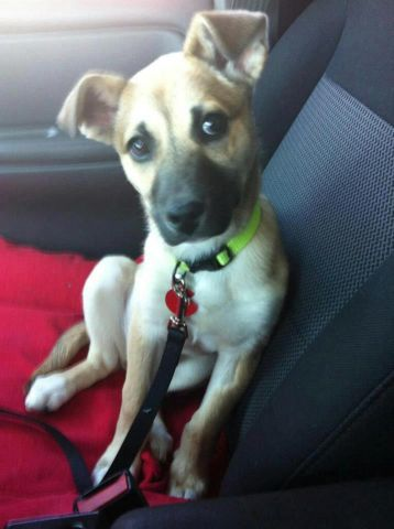 Ow.ly - image uploaded by @PedigreeUS