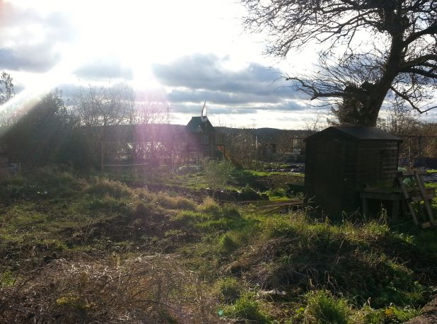 sun over allotment.jpg