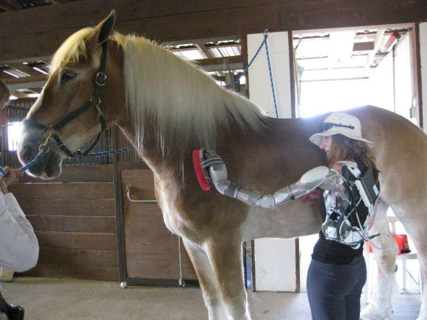 2223.V18.grooming-horse6.jpg