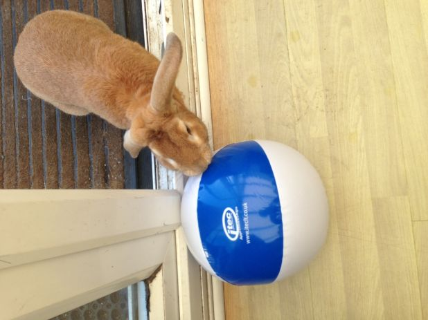 Beach Ball Bunny KP.jpg