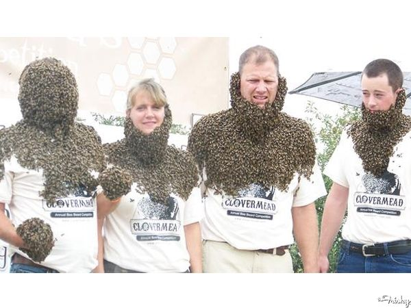 Bee-Beard-Competition copy.jpg