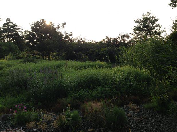 Photo on 2013-07-26 at 18:08.jpg