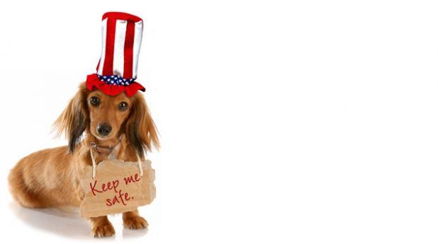 july-4-dog-photo.jpg