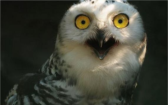 Shocked Owl.jpg