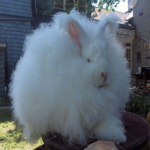 10. rabbit.jpg