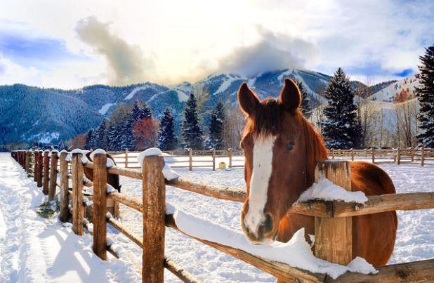 HorsePasture.jpg