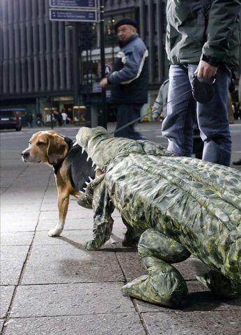 crocdog-1914-_tphq.jpg