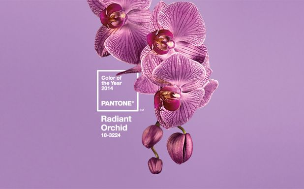 Pantone Color of the Year ~ Radiant Orchid.jpg