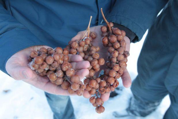 1ice_wine_-_colio-2.jpg
