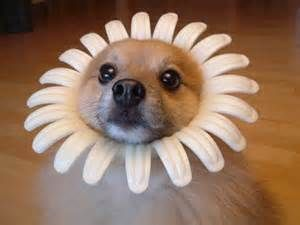dog in daisy.jpg