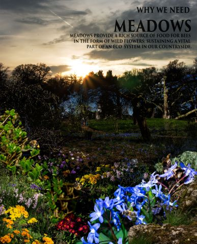 WHY WE NEED MEADOWS-Recovered.jpg