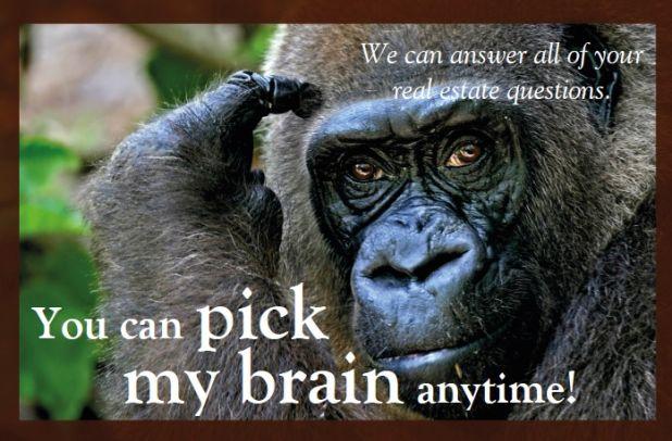 gorilla real estate pix.jpg