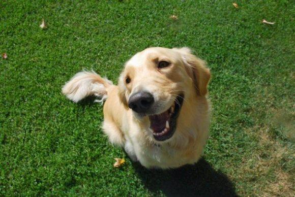 l-Jack-My-Happy-Dog.jpg