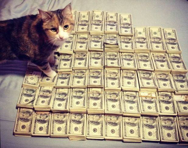 money-cat-15.jpg
