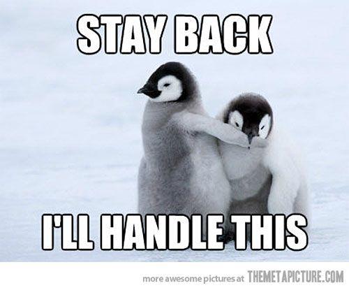penguin-chicks.jpg