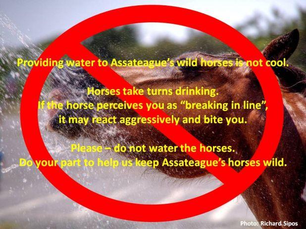 Horse Drinking.jpg