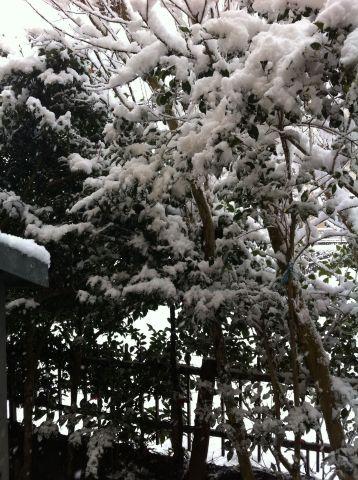 Photo on 2010-12-31 at 09:37.jpg