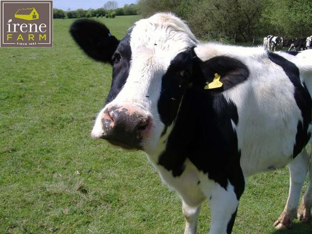 sad-cow.jpg