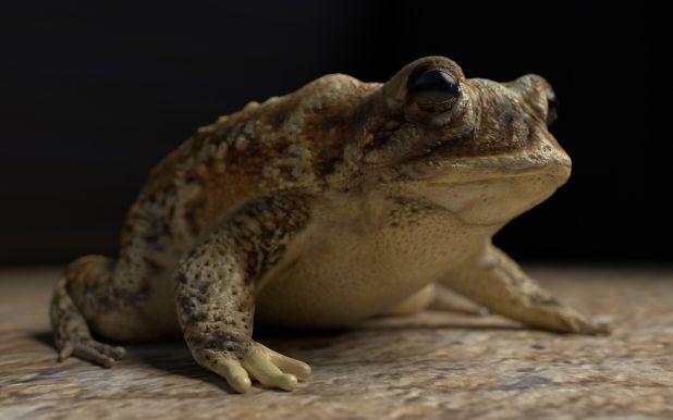 toad_4k.jpg