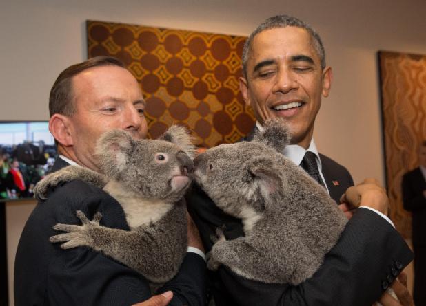 Obama, Koala, ObamaKoala