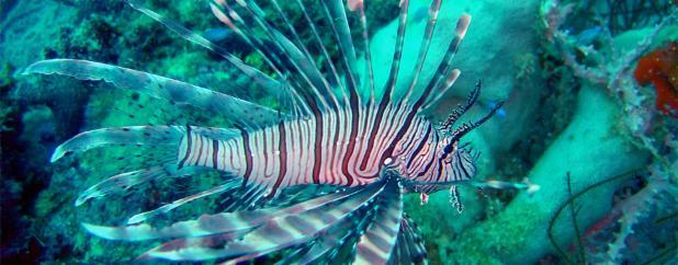turkeyfish.jpg
