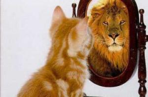 kitten-looking-in-mirror-seeing-a-lion_crop380w-300x197.jpg