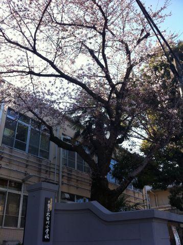 Photo on 2011-04-04 at 08:01.jpg