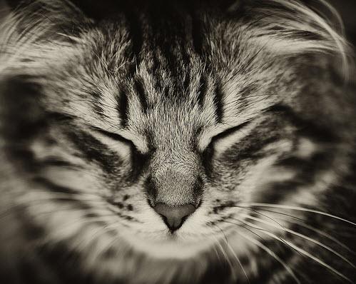 CatPOVCall_TW499x398.jpg