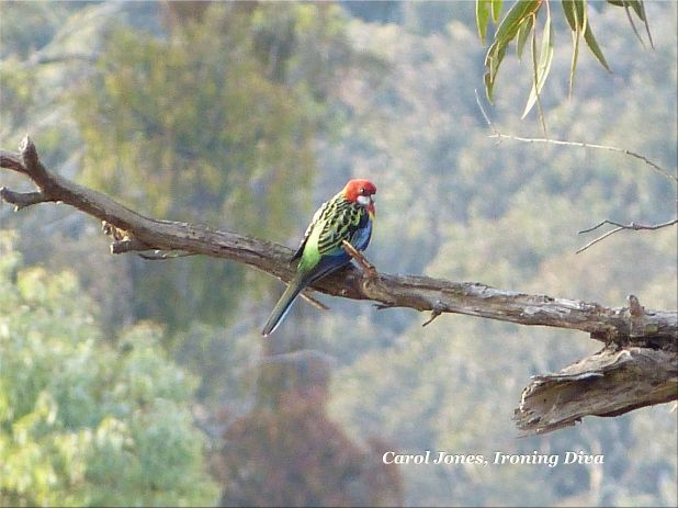 An Eastern Rosella Perches High Above This Morning Mist 2012 April 27.jpg