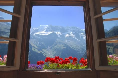 p664257-Gimmelwald-Morning_glory.jpg