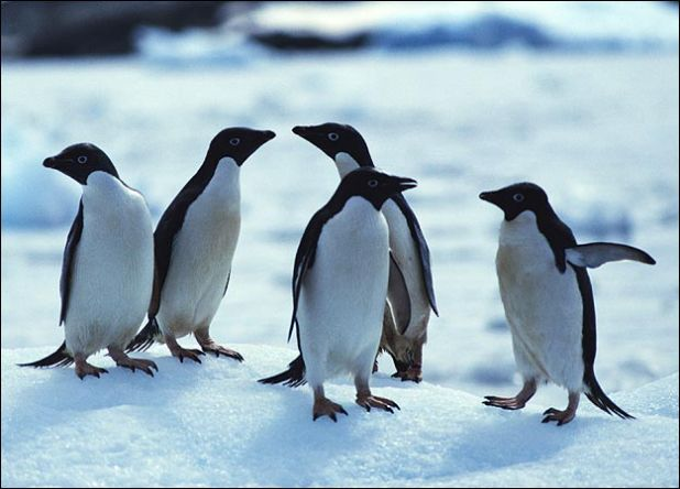 penguin-picture.jpg