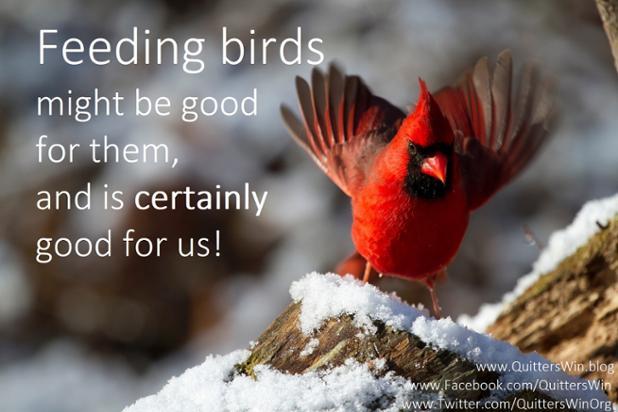 12.30.2017 feed the birds.jpg