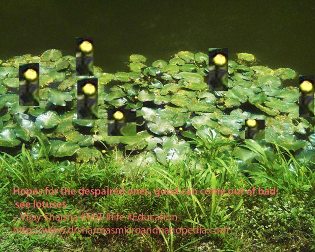 Lotus 2 copy.jpg