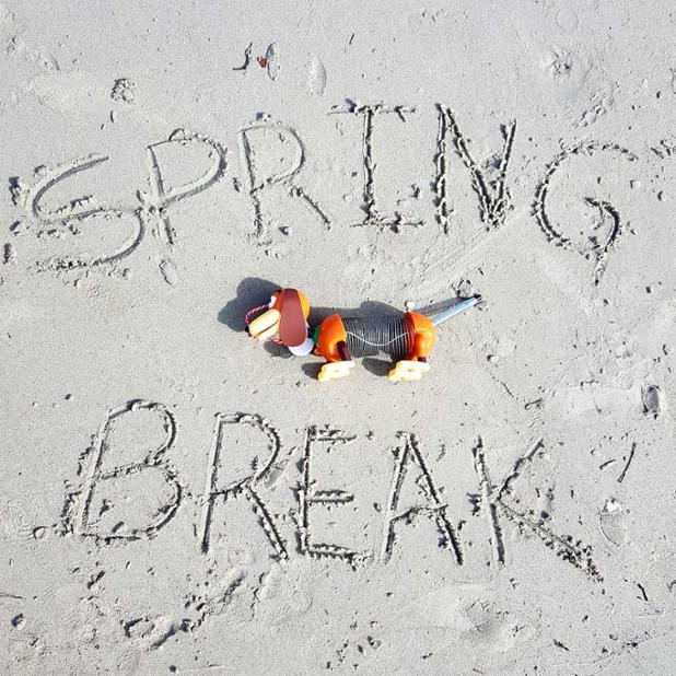 slinky-dog-spring-break.jpg