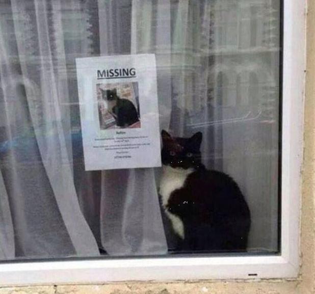 missingcat.png