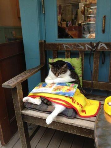 cat and book.jpg