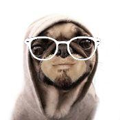 pug_life.jpg