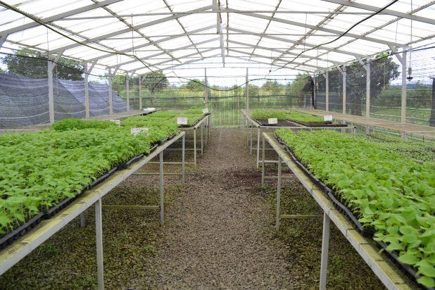 Plant nursery in Sovanna Baitong.jpg