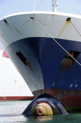 pb-120602-whale-cannon.photoblog900.jpg