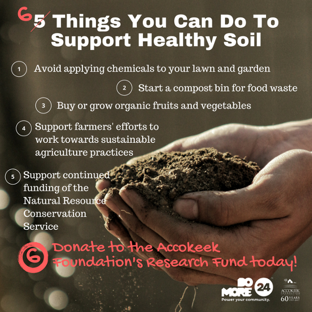 5 Things You Can Do To Support Healthy Soil.png