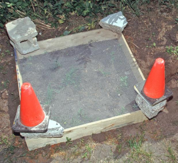 PPNP turtle nest protection.jpg