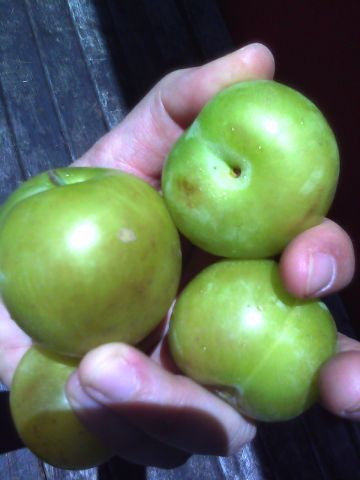 green plums.jpg
