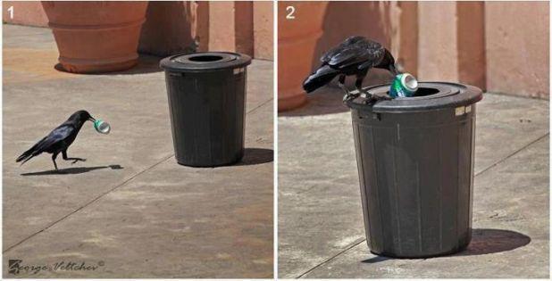 Raven Recycling.jpg