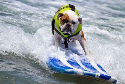 surf-dogs.jpg