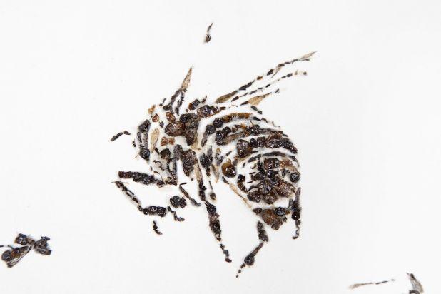 bee-daily-pic.jpg