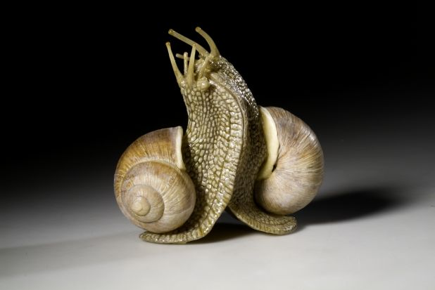 Helix_pomatia_12.jpg