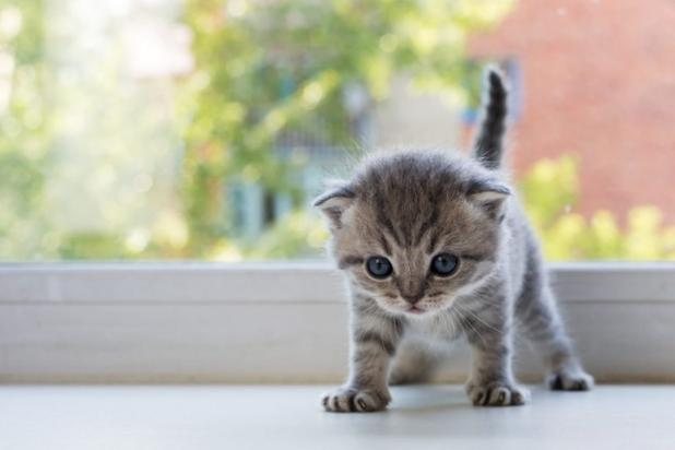 kitten-anxiety_canna-pet-e1490739366728-1024x683.jpg