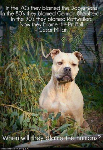 Blame humans not breeds.jpeg